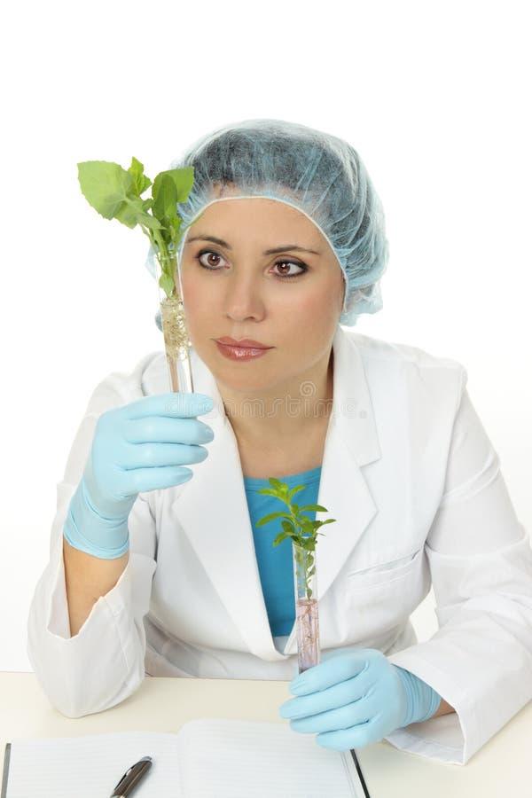 ботанический научный работник стоковая фотография rf