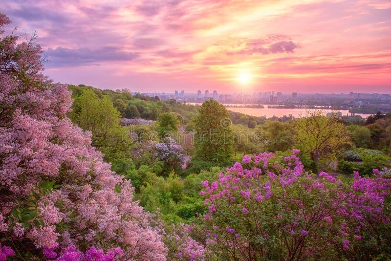 Ботанический сад в Киеве Киеве на восходе солнца Изумляя ландшафт утра с цвести сиренью, Украиной стоковая фотография rf
