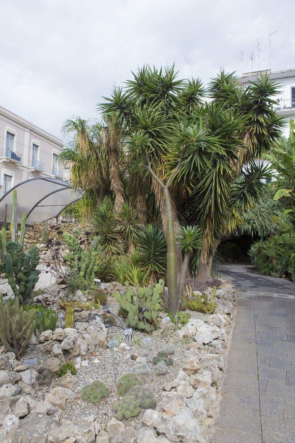 Ботанический сад от Катании стоковая фотография rf