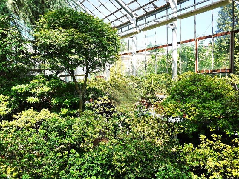 Ботанический сад Петра I город Санкт-Петербурга В этом месте вы можете увидеть примеры заводов, цветков, плодов и стоковое фото