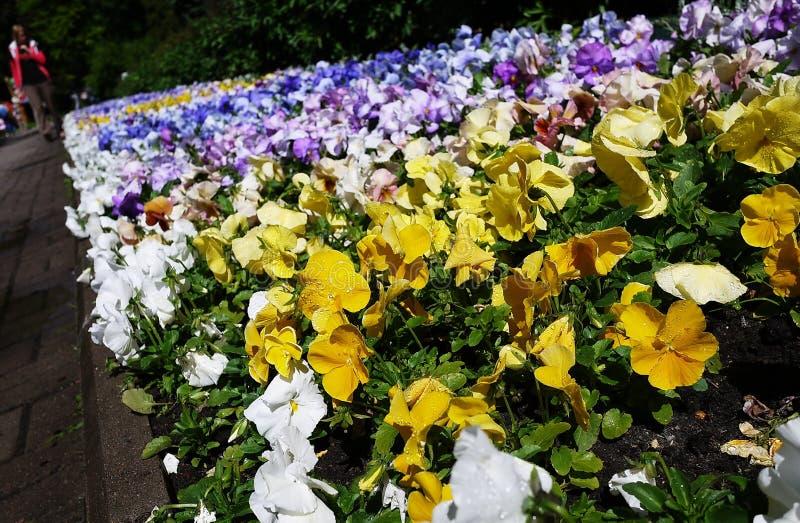 Ботанический сад Петра I город Санкт-Петербурга В этом месте вы можете увидеть примеры заводов, цветков, плодов и стоковые фотографии rf