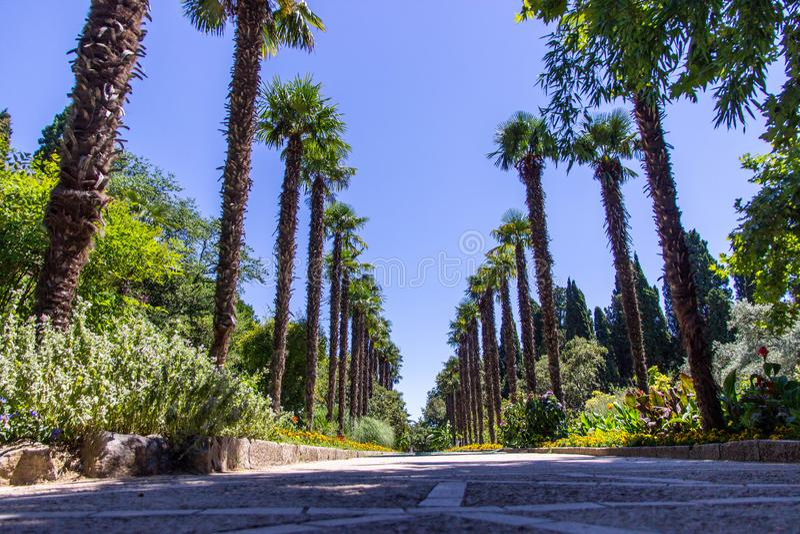 Ботанический сад Nikita в Крыме стоковые фотографии rf