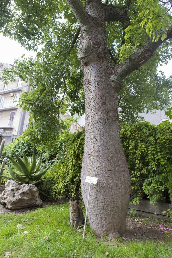 ботанический сад стоковые фотографии rf