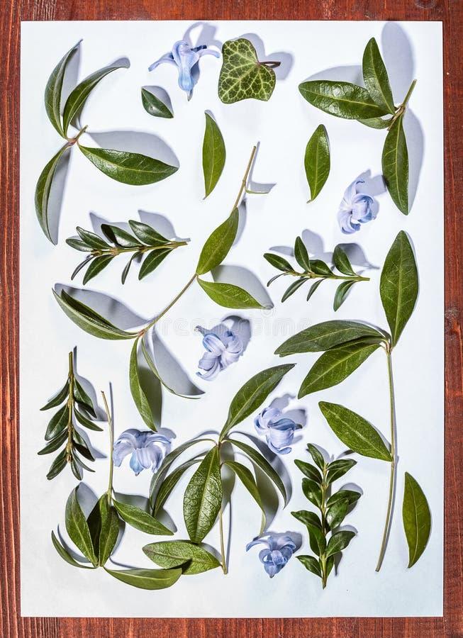 Ботанический minimalistic натюрморт Листья и цветки на белой предпосылке стоковые фото
