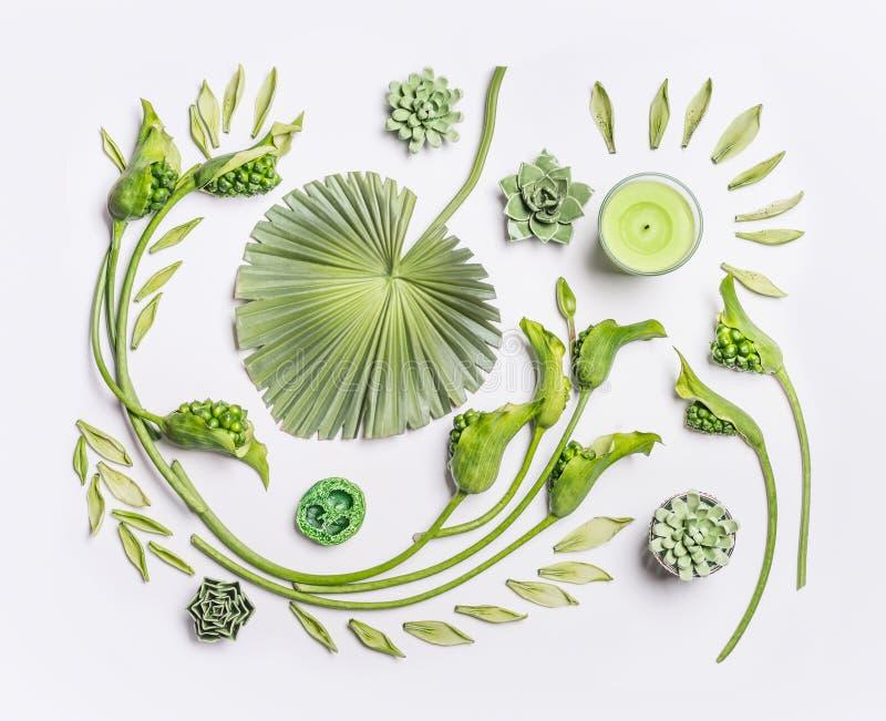 Ботаническое плоское положение с тропическими листьями, суккулентными заводами, зелеными цветками и свечами на белой предпосылке, стоковая фотография rf