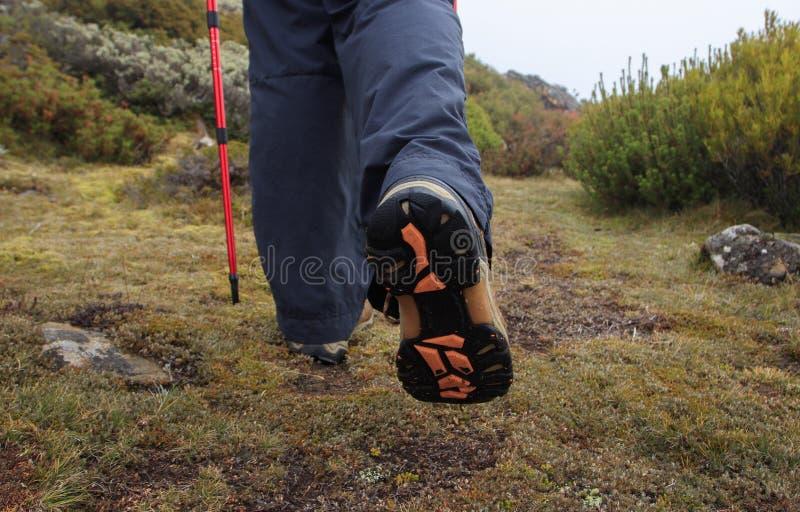 Ботинки в высокогорной окружающей среде стоковое изображение rf
