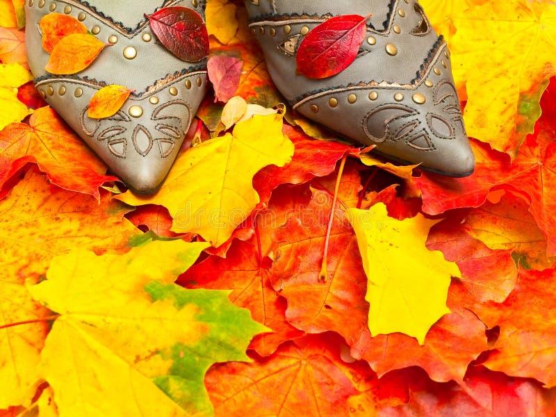 ботинки листьев осени стоковые изображения
