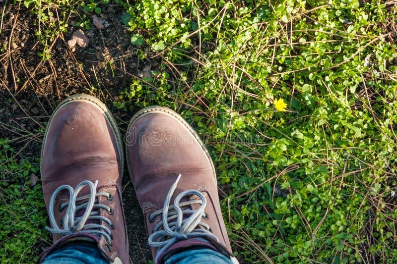 Ботинки на траве стоковая фотография