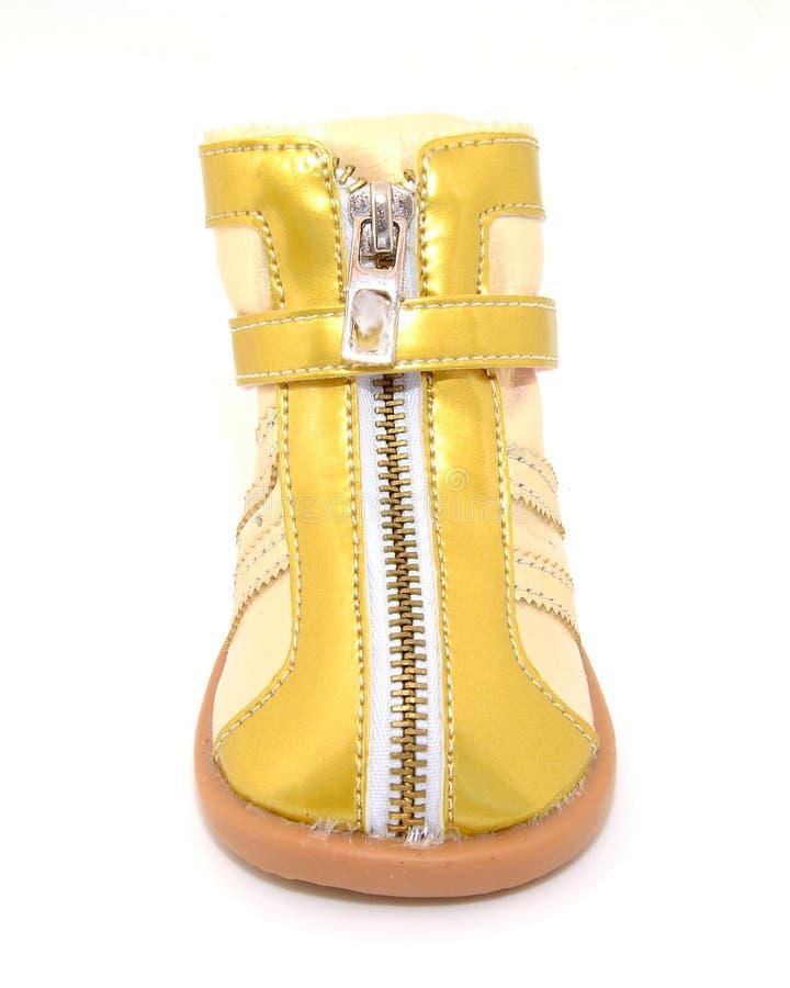 Ботинок собаки золотой стоковое изображение