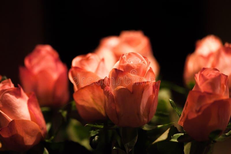 Более старые красные розы стоковое изображение rf