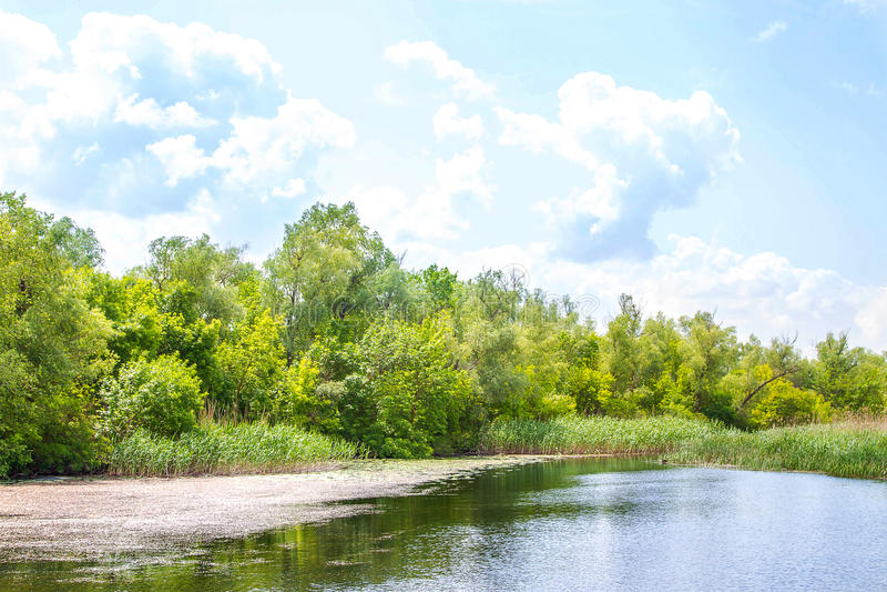 Болота и Kherson Dnieper реки ландшафта стоковые изображения