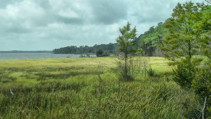 Болото Алабамы стоковая фотография