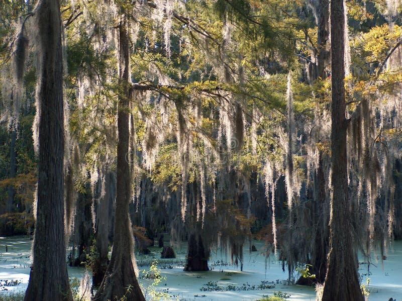 Болото Луизианы стоковые изображения