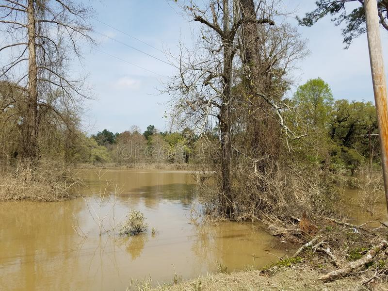 Болото Луизианы стоковые фото