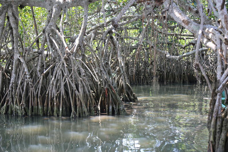 Болото мангровы стоковые изображения