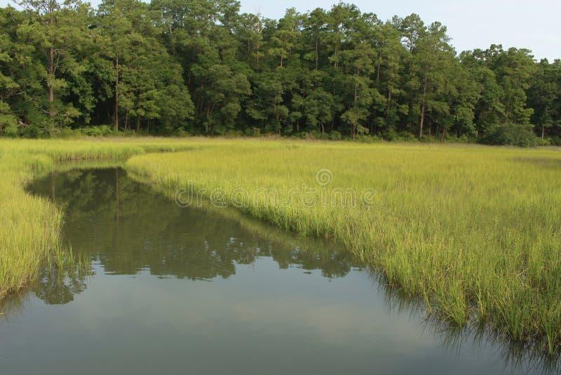 болото стоковые фотографии rf