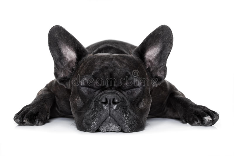 Больная больная собака стоковые фото