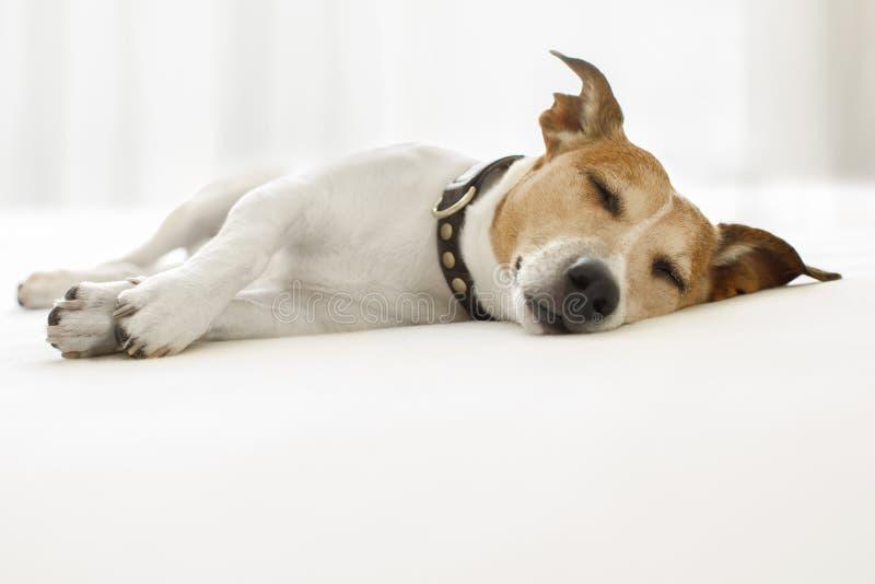 Больной собаки, больной или спать стоковые изображения rf