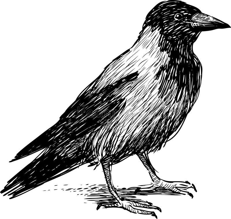 Черно белая картинка грача