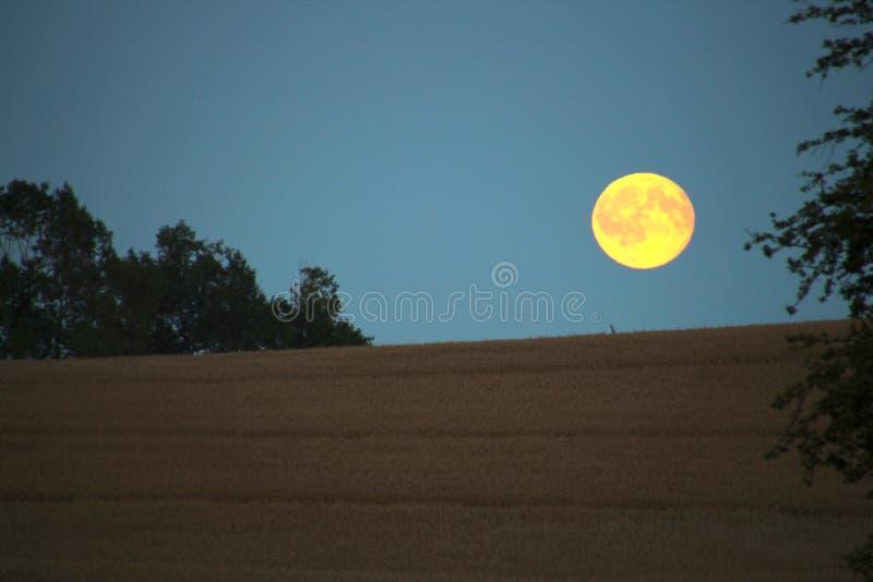 Большая желтая луна стоковые фотографии rf