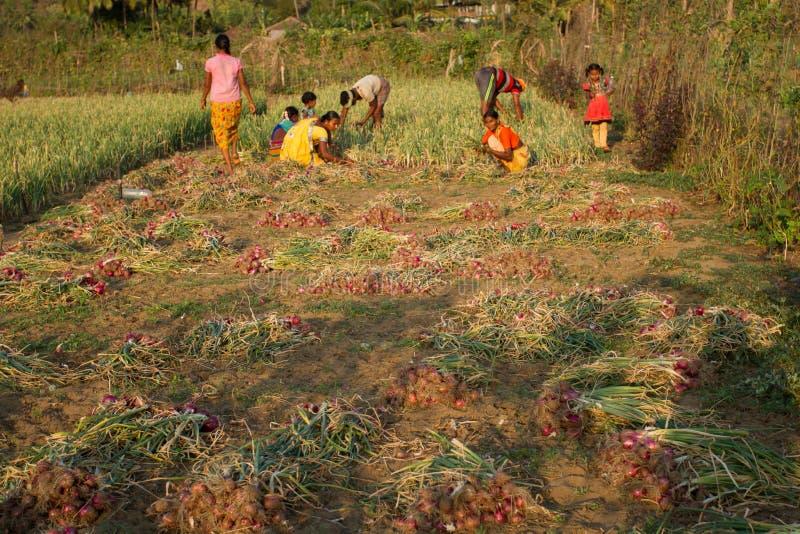 Большая индийская семья жмет красные луки Индия, Karnat, Gokarna, весна 2017 стоковые изображения rf