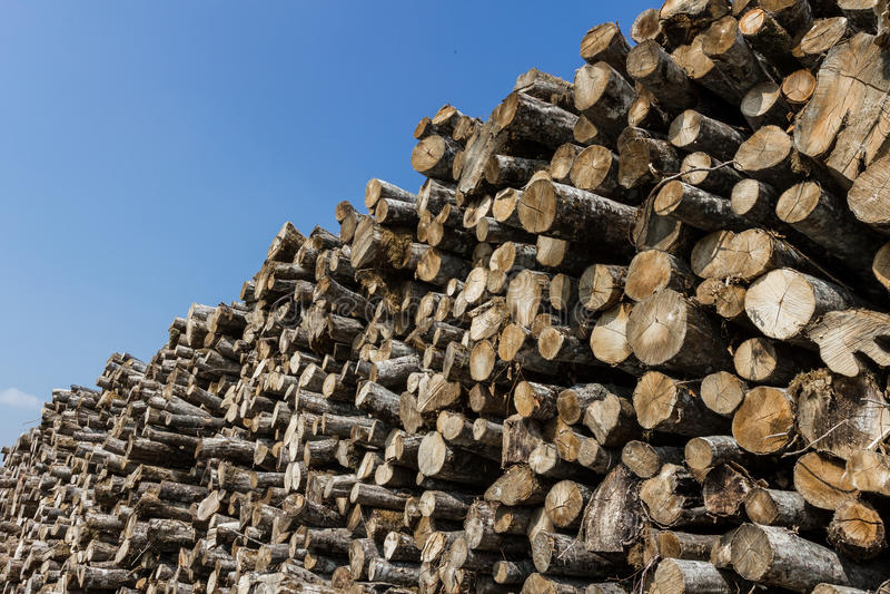 Большая куча деревянных журналов стоковые изображения rf
