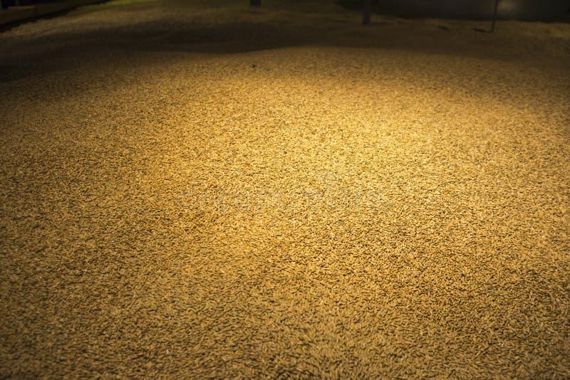 Большая куча зерна ячменя стоковая фотография
