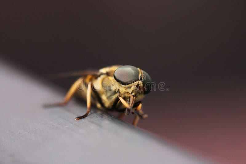 большая муха стоковая фотография