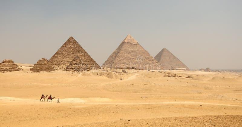 Большая пирамида с верблюдом стоковое фото