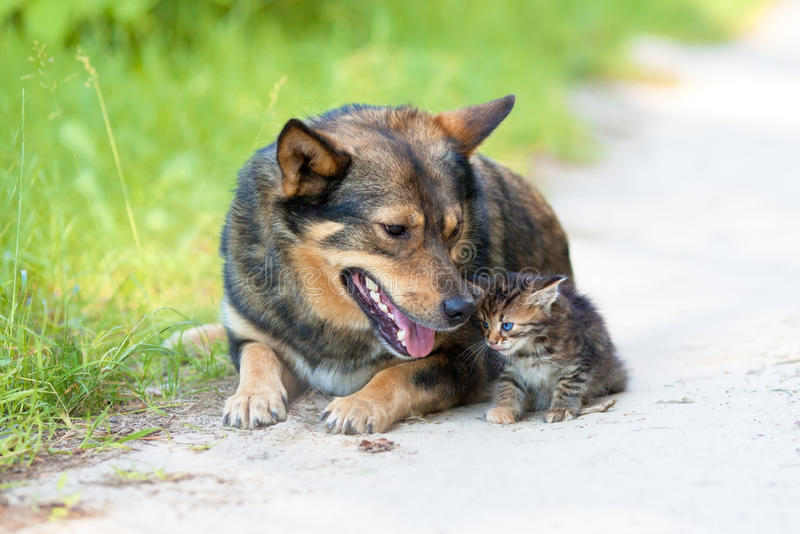 Большая собака и маленький котенок стоковое изображение rf