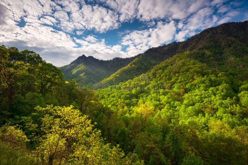 Большая фотография ландшафта национального парка закоптелых гор сценарная стоковая фотография rf