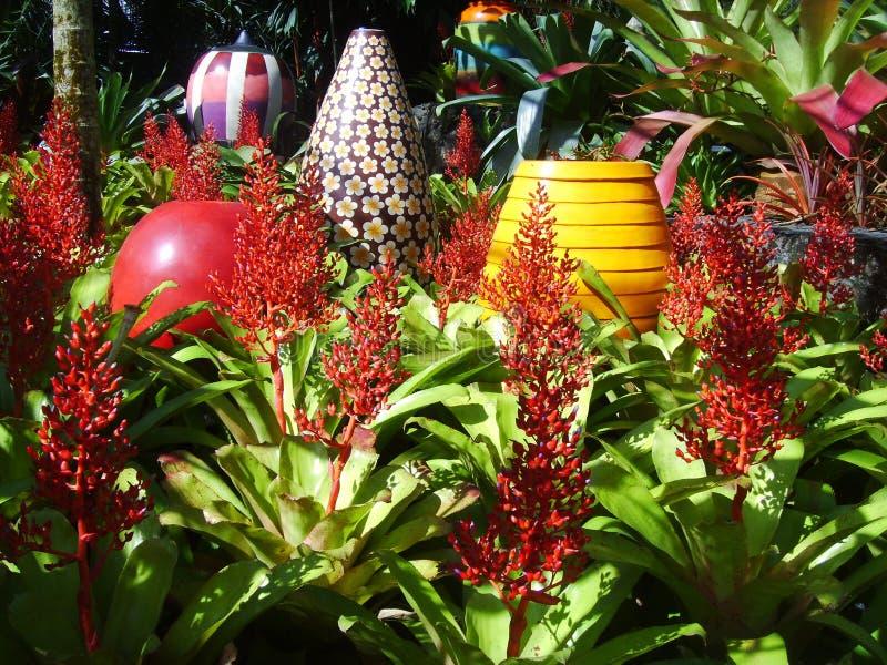 Большая цветистая ваза для того чтобы украсить сад Bromeliad стоковые фотографии rf