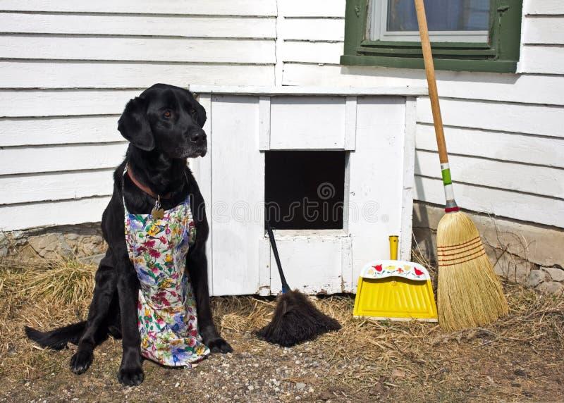 Весна убирая дом собаки стоковое фото