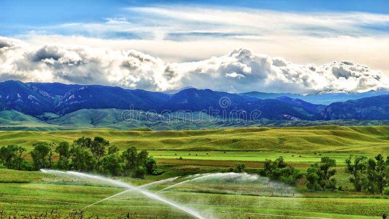 Большие горы рожка в буйволе стоковое фото