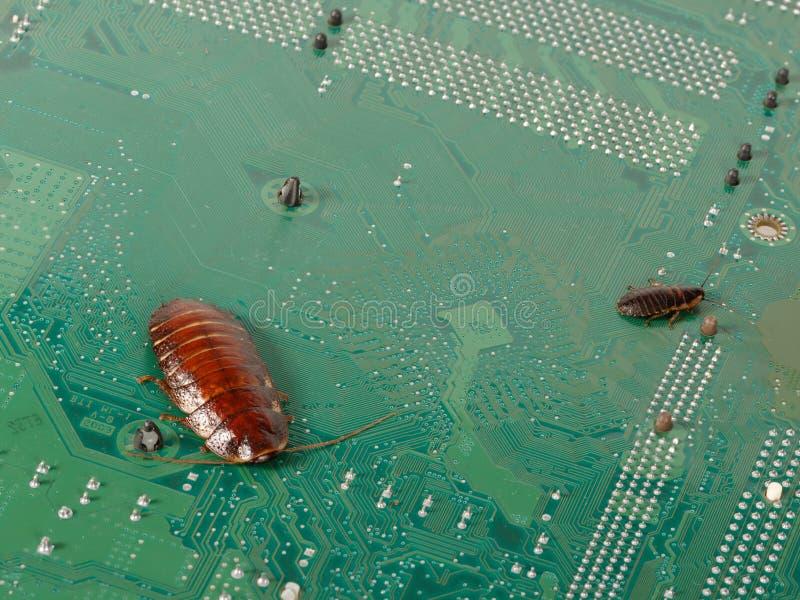 Большие и малые тараканы на микросхемах компьютера Концепция стоковое изображение rf