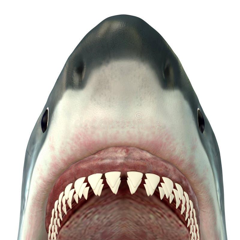 Большие челюсти белой акулы стоковые изображения rf