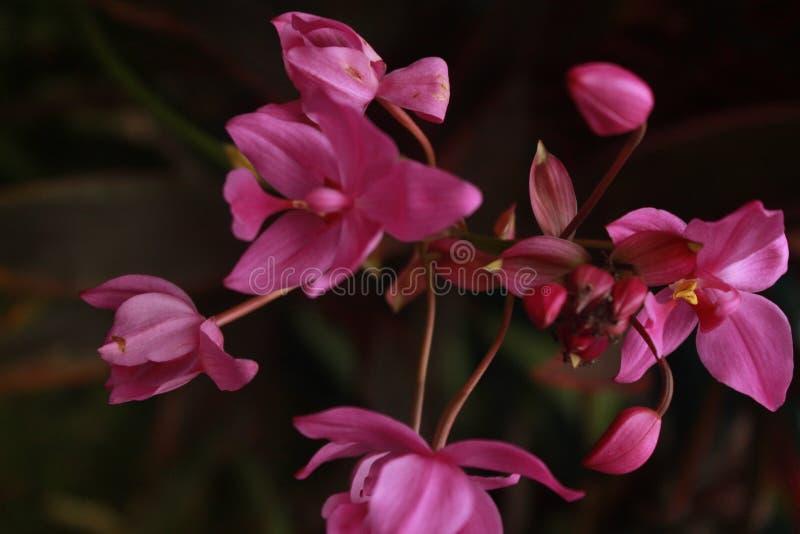 Большинств цветок пурпура красоты стоковые фото