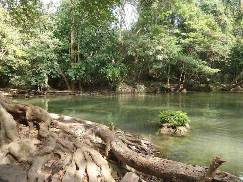Большое дерево вдоль зеленого потока водопада стоковая фотография