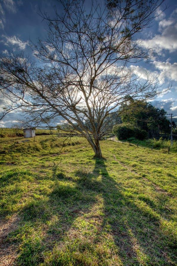 Большое дерево в поле сельской местности - широкоформатном заднем свете - высокий динамический диапазон стоковая фотография