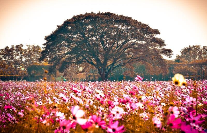 Большое дерево в цветке поля стоковые изображения