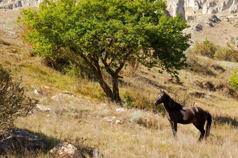 Большое дерево и лошадь смотря его стоковые изображения