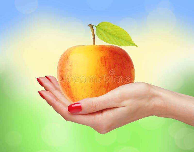 Большое желтое яблоко в руке женщины над яркой природой стоковая фотография