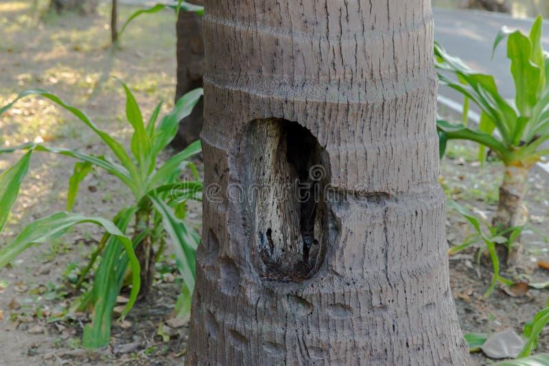 Большое отверстие на пальме стоковая фотография rf