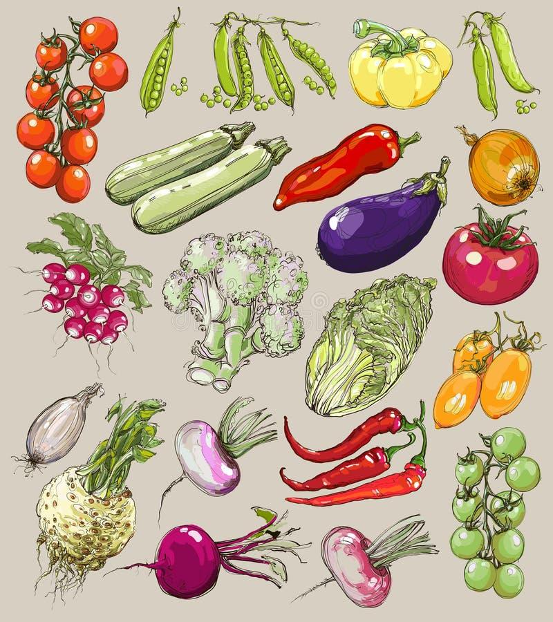 Большое собрание нарисованных вручную овощей, вектор иллюстрация вектора