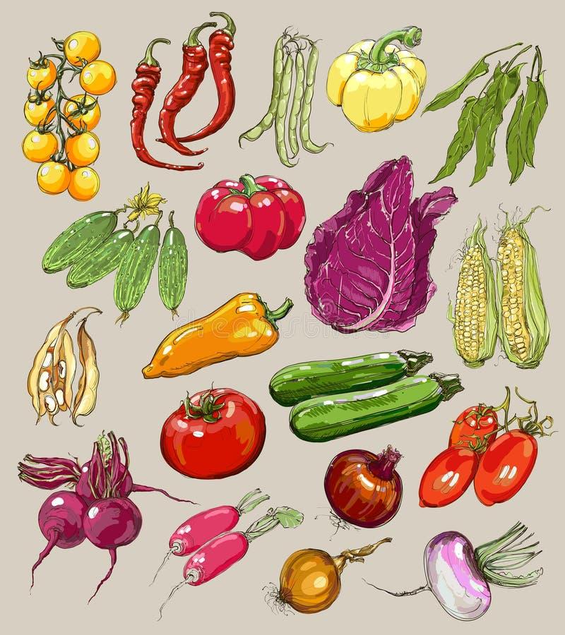 Большое собрание нарисованных вручную овощей, вектор иллюстрация штока