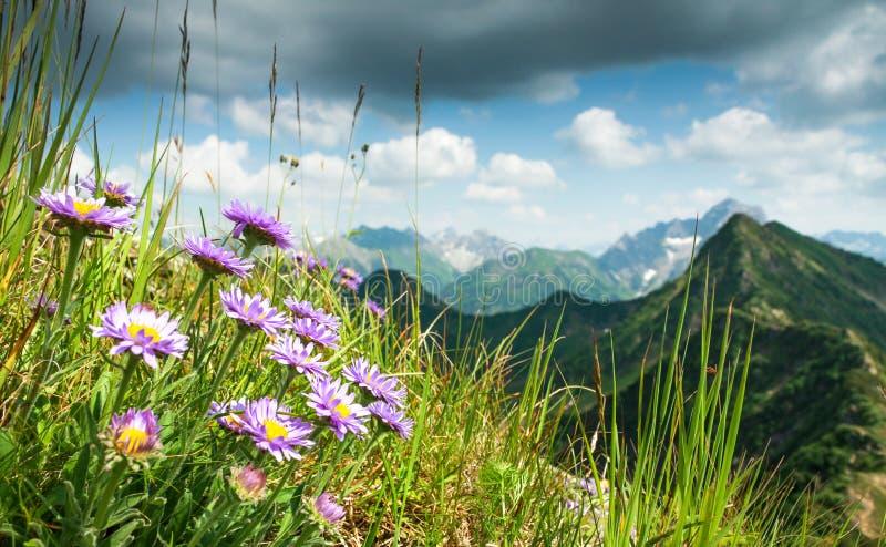 Большое четкое представление от высокой горы с цветками в переднем плане стоковая фотография