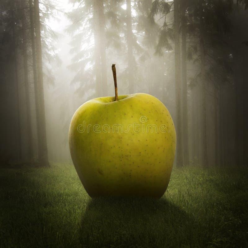 Большое яблоко в лесе стоковые фото