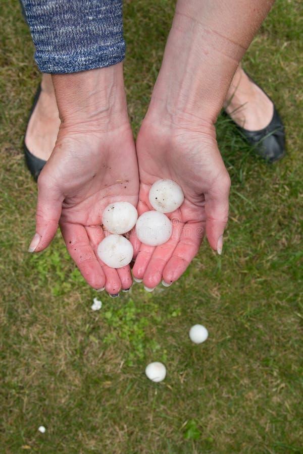 Большой оклик после hailstorm стоковая фотография