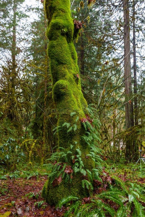 Большой папоротник покрыл дерево стоковые фото