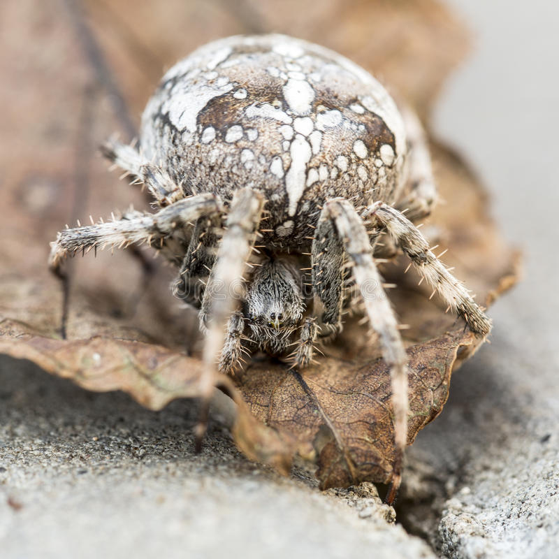 предложения услуги паук с шариком на спине фото желательно выполнять